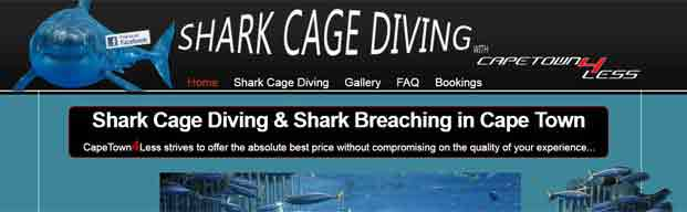 Shark Cage Diving & Shark Breaching in Cape Town